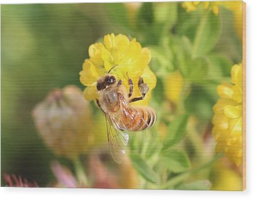 Honeybee On Hop Clover Wood Print