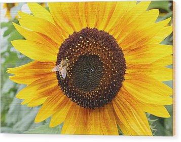 Honeybee On Small Sunflower Wood Print