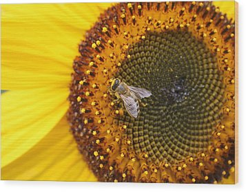 Honeybee On Sunflower Wood Print