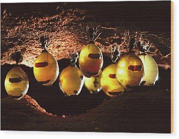 Honeypot Ants Wood Print by Reg Morrison