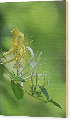 Honeysuckle Wood Print by Gerald Hiam