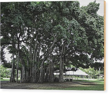 Honolulu Banyan Tree Wood Print by Daniel Hagerman
