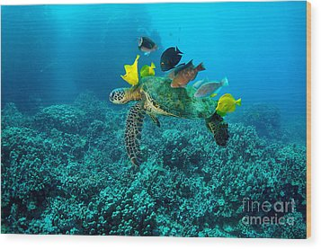 Honu Cleaning Station Wood Print by Aaron Whittemore