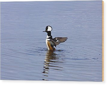 Hooded Merganser Wood Print by Wild Expressions Photography
