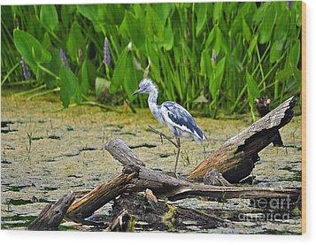 Hooligan Heron Wood Print by Al Powell Photography USA