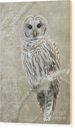 Hoot Hoot Hoot  Wood Print by Beve Brown-Clark Photography