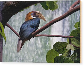 Wood Print featuring the photograph Hornbill In Paradise by Adam Olsen