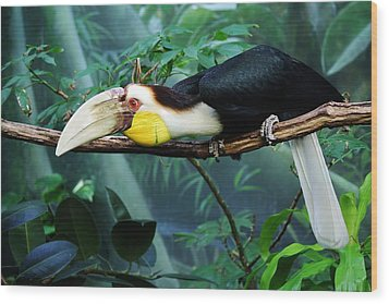 Hornbill Wood Print by Paulette Thomas