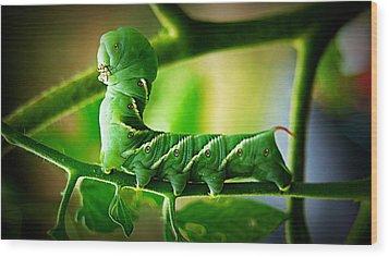 Hornworm Wood Print