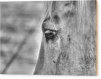 Horse 1 Wood Print by Jimmy Ostgard