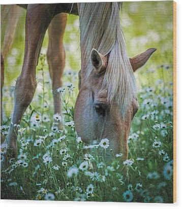 Horse And Daisies Wood Print by Paul Freidlund