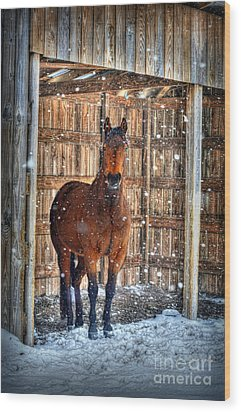Horse And Snow Storm Wood Print by Dan Friend