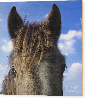 Horse Wood Print by Bernard Jaubert