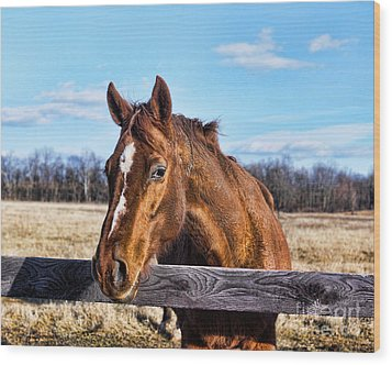 Horse Country Wood Print