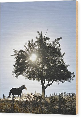 Horse Dreaming Under Tree Wood Print