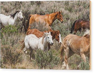 Horse Drive Chaos 2 Wood Print