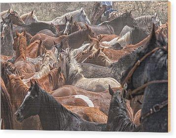 Horse Drive Chaos Wood Print
