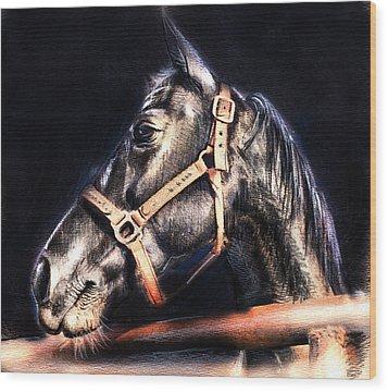 Horse Face - Pencil Drawing Wood Print by Daliana Pacuraru
