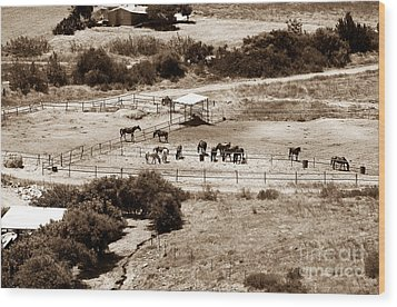 Horse Farm At Kourion Wood Print by John Rizzuto