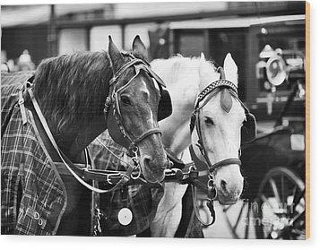 Horse Friends Wood Print by John Rizzuto
