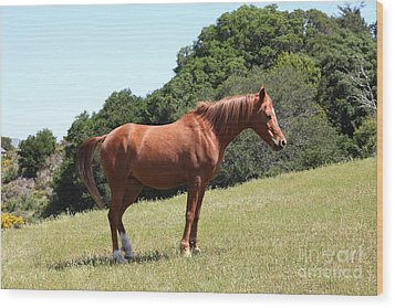 Horse Hill Mill Valley California 5d22683 Wood Print by Wingsdomain Art and Photography