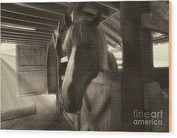 Horse In Barn Stall Wood Print by Dan Friend