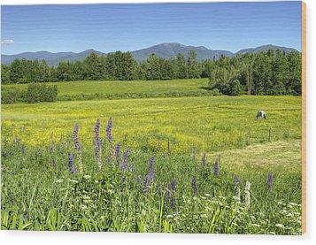 Horse In Buttercup Field Wood Print