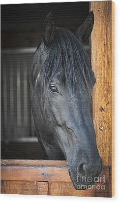 Horse In Stable Wood Print by Elena Elisseeva