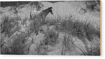 Horse In The Dunes Wood Print