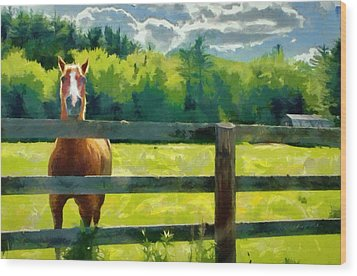 Horse In The Field Wood Print by Jeff Kolker