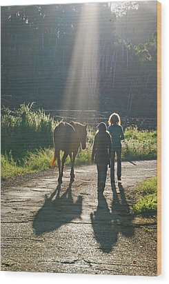 Horse In The Spotlight Wood Print