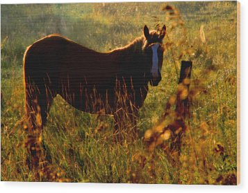 Horse Wood Print by Jim Vance
