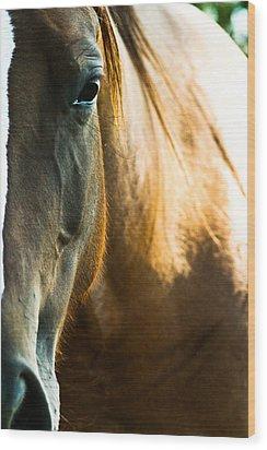Horse Wood Print by Joel Loftus