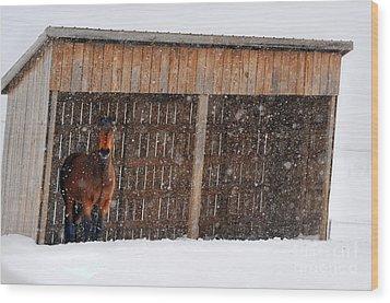 Horse Looking At Snow Storm Wood Print by Dan Friend