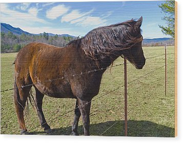 Horse Wood Print by Melinda Fawver