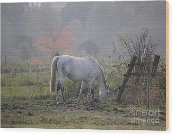Horse On A Peaceful Day Wood Print