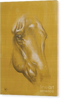 Horse Portrait Wood Print by Tamer and Cindy Elsharouni