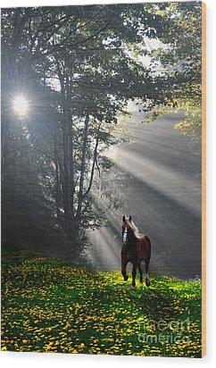 Horse Running In Dandelion Field With Streaming Sunlight Wood Print by Dan Friend