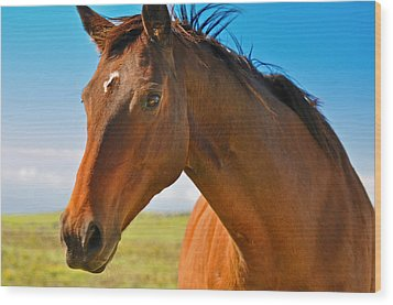 Wood Print featuring the photograph Horse by Sabine Edrissi