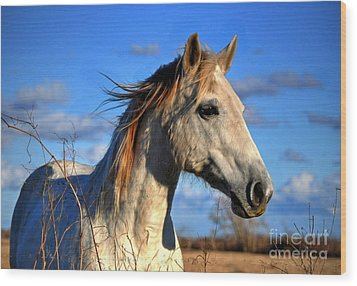 Wood Print featuring the photograph Horse by Savannah Gibbs