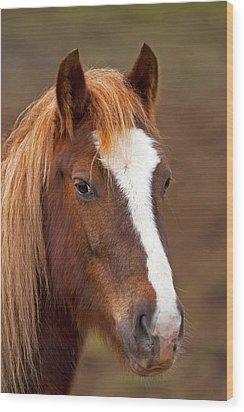 Horse Stare Wood Print by Paul Scoullar