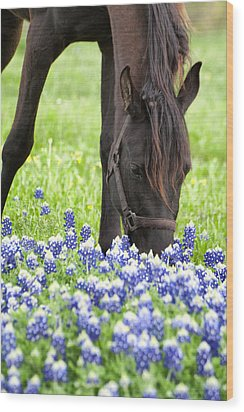 Horse With Bluebonnets Wood Print