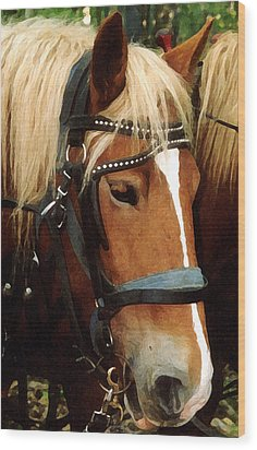 Horsehead Wood Print by Susan Crossman Buscho
