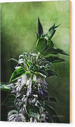Wood Print featuring the photograph Horsemint by Karen Slagle