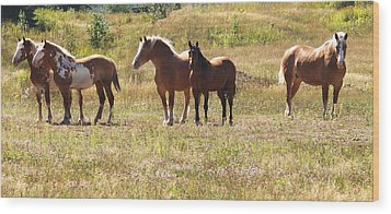 Horses In A Field Wood Print by Susan Crossman Buscho