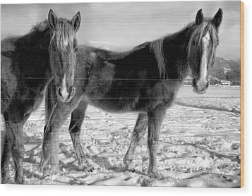 Horses In Winter Coats Wood Print by Joan Herwig