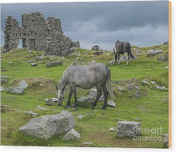 Horses On The Moors Of Dartmoor Wood Print by Patricia Hofmeester