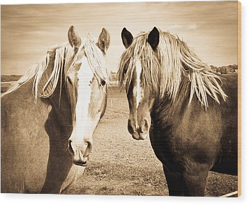 Horses  Wood Print by Paulina Szajek