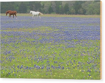 Horses Running In Field Of Bluebonnets Wood Print by Connie Fox