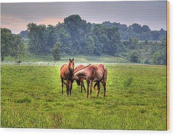 Horses Socialize Wood Print